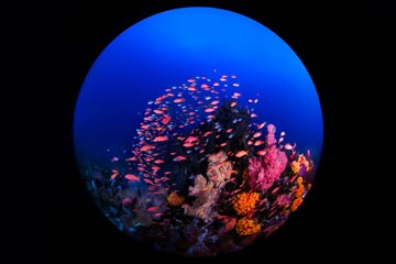 Raja Ampat Biodiversity Eco Resort - Underwaterworld