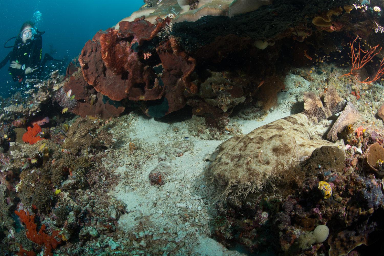 Raja Ampat Dive Sites - Mioskun