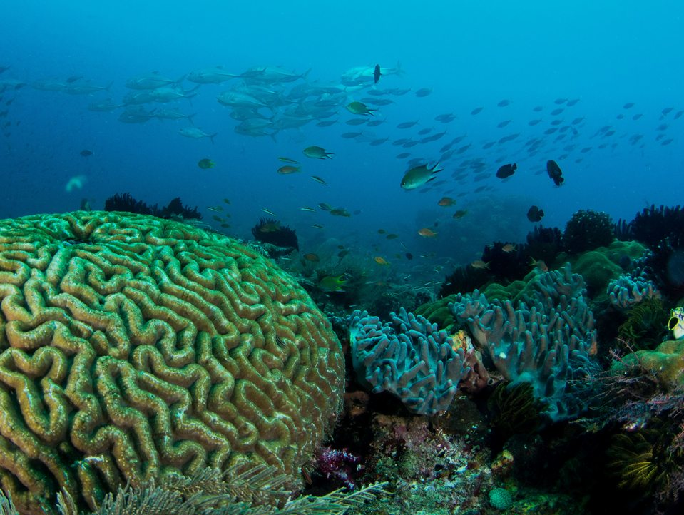 diving in raja ampat wide angle photos