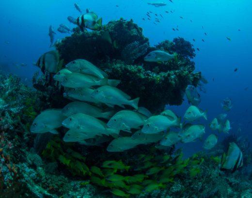 Raja Ampat Dive Sites Shinwa Maru