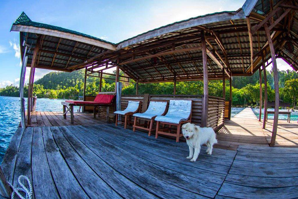 raja ampat resort jetty 4