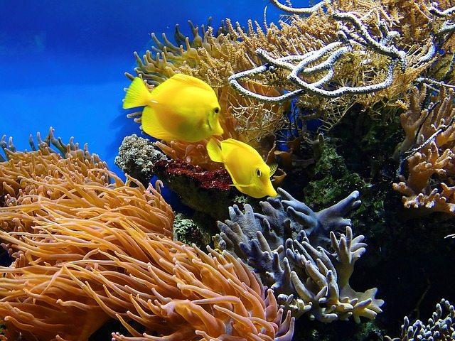 mejores viajes de buceo coral