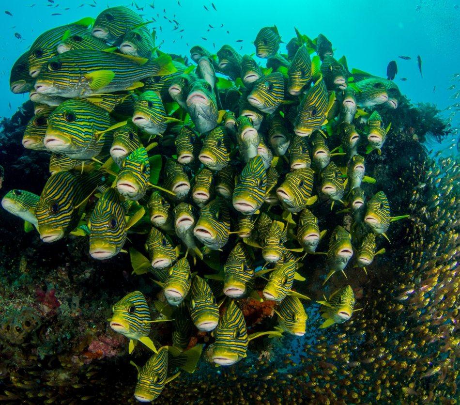 buceo en indonesia banco peces