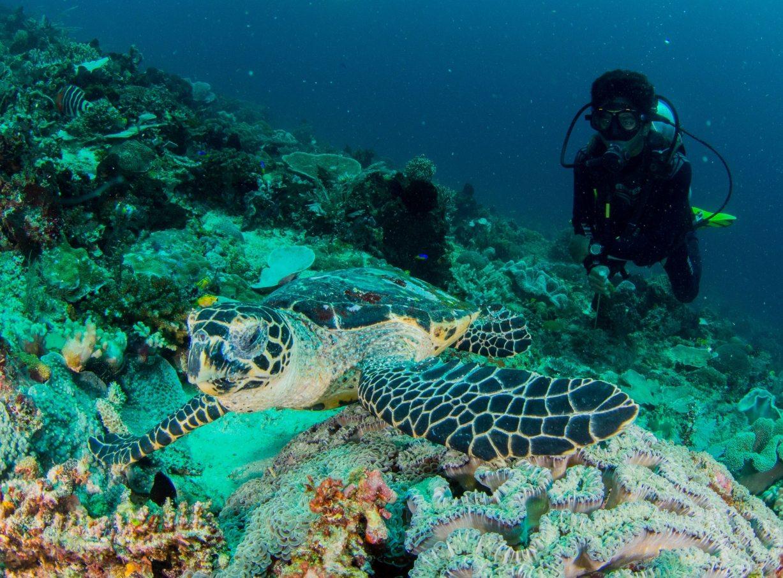 buceo en indonesia tortuga