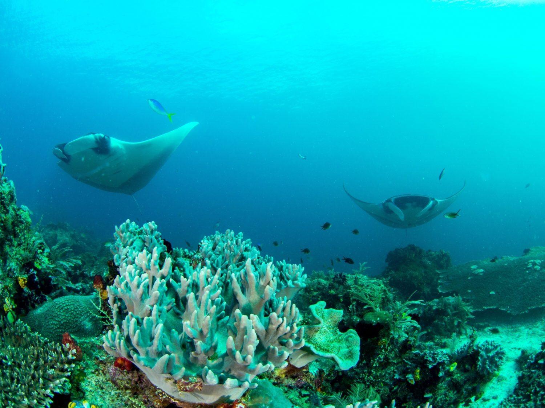 buceo en indonesia