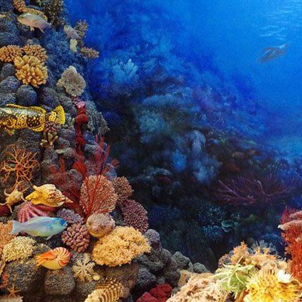 raja-ampat-coral