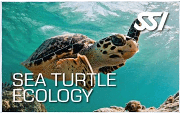 ecology specialty programs - sea turtle ecology