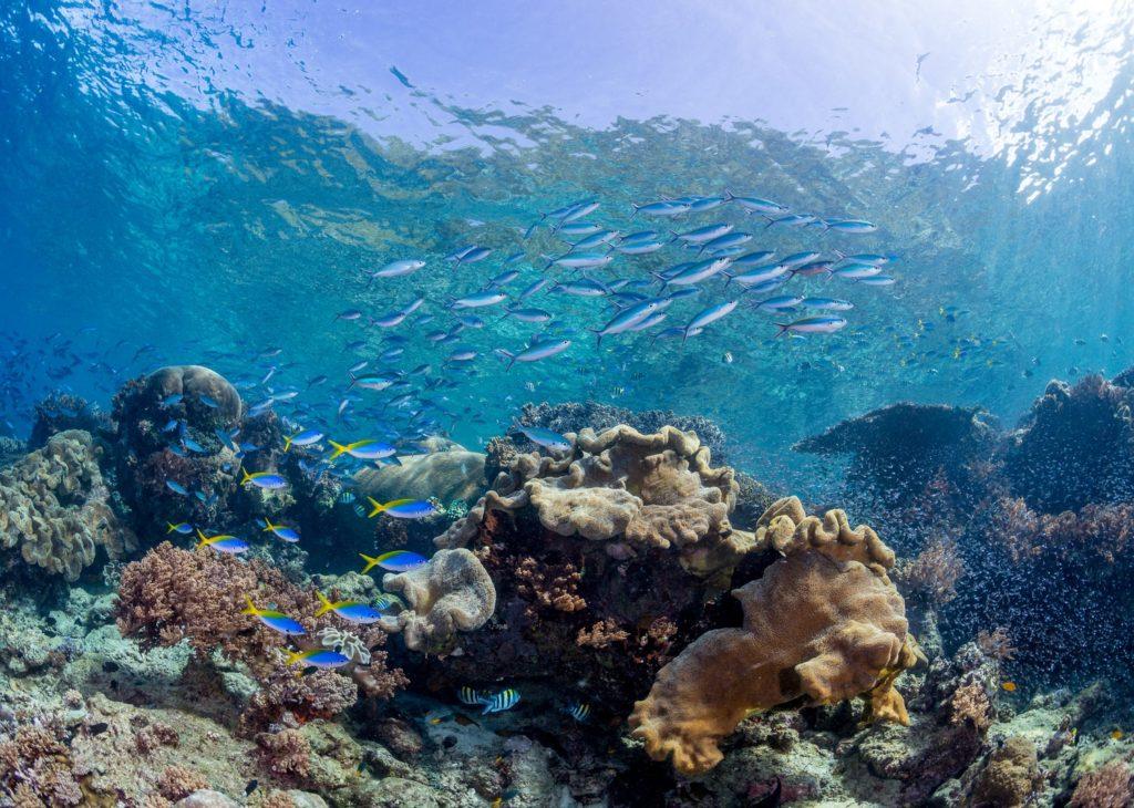 Raja ampat dive sites raja ampat biodiversity eco resort - Dive resort raja ampat ...