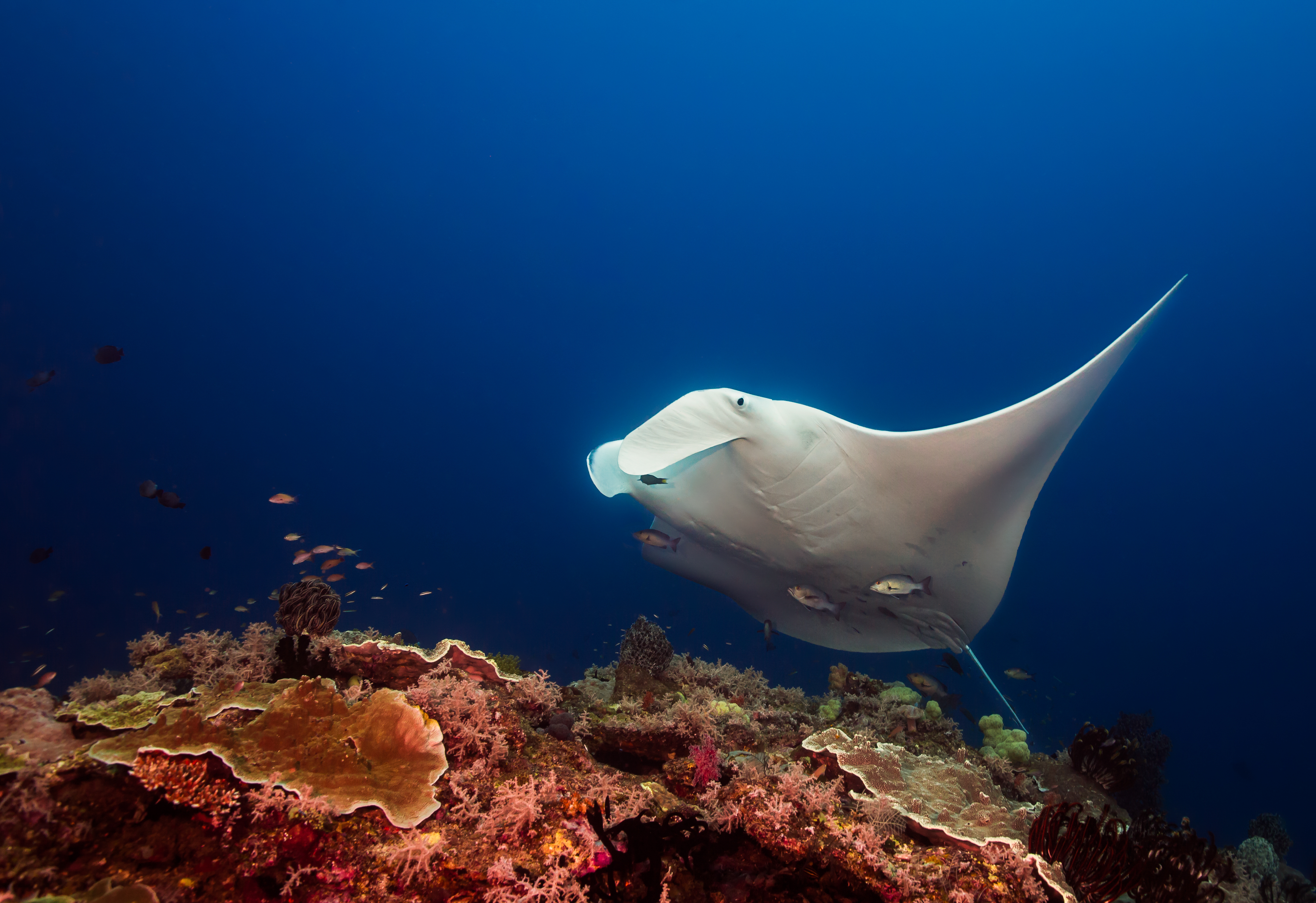 best family dive vacations