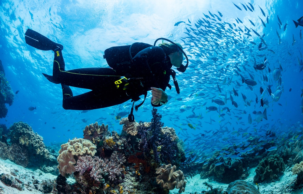 8 types of diving you need to know about biodiversity eco resort
