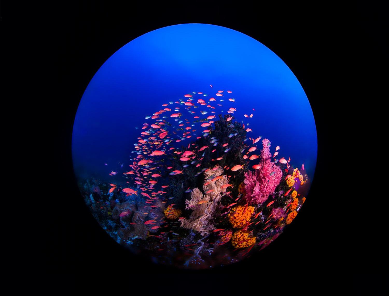 Puntos de Inmersión en Raja Ampat