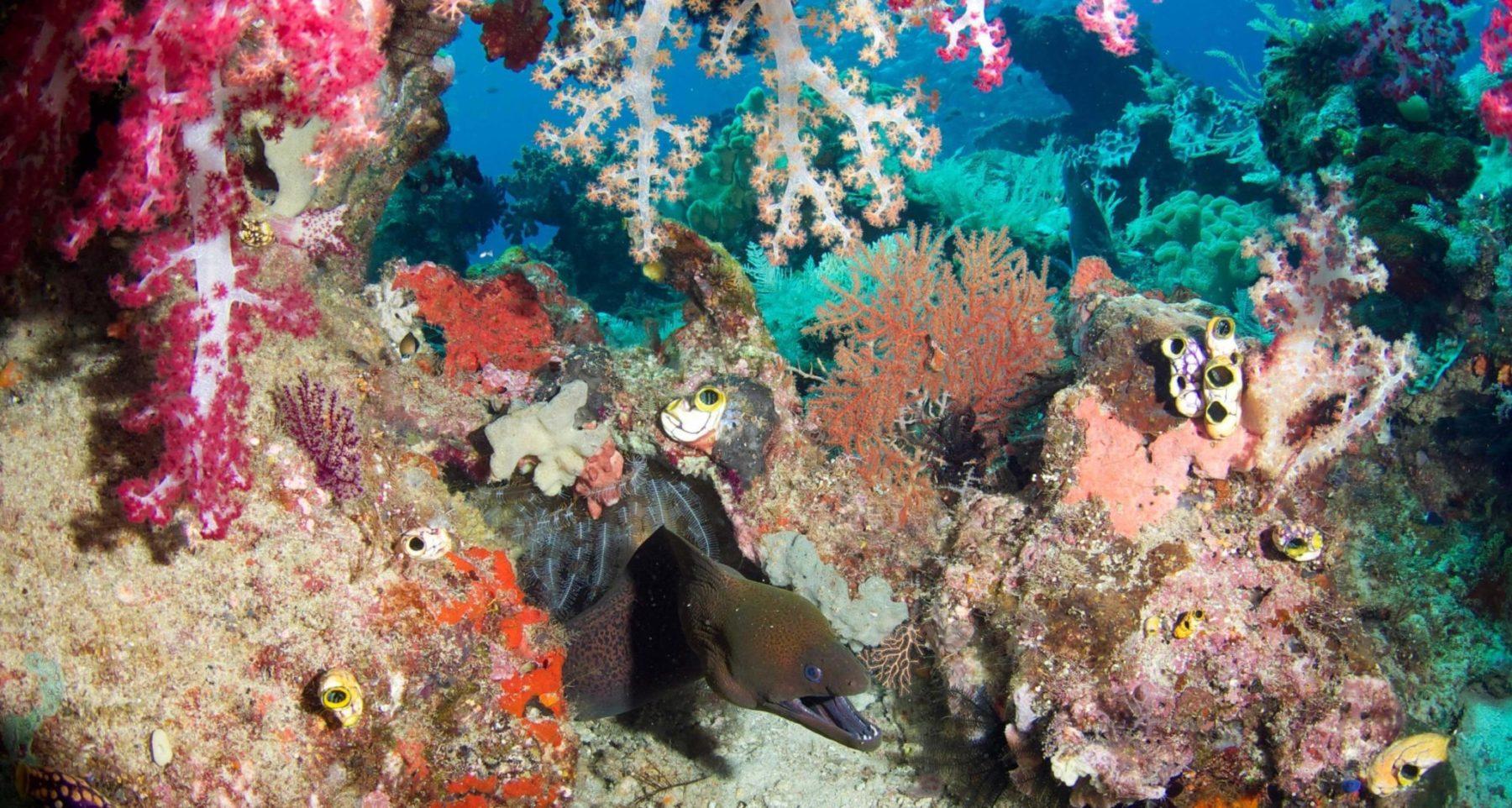 raja ampat indonesia biodiversity