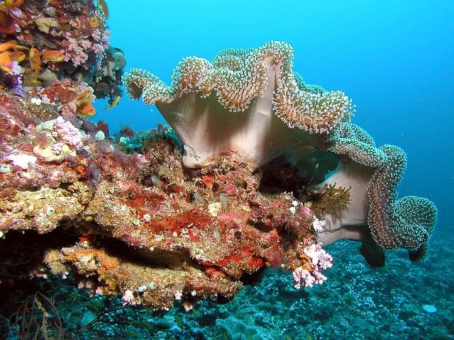 best scuba diving trips in the world