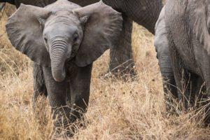que ver en indonesia elefantes
