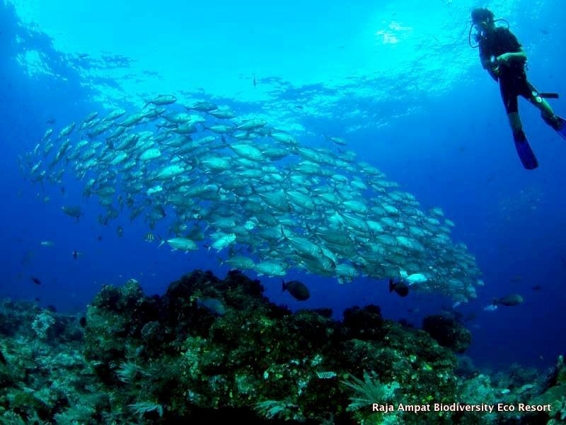 Raja Ampat tour blue magic