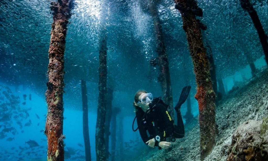 Dive master with our Dive center in Raja ampat