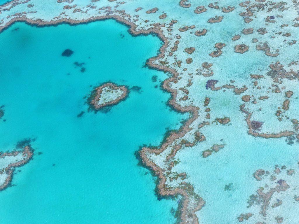 Buceo en Australia gran barrera de coral