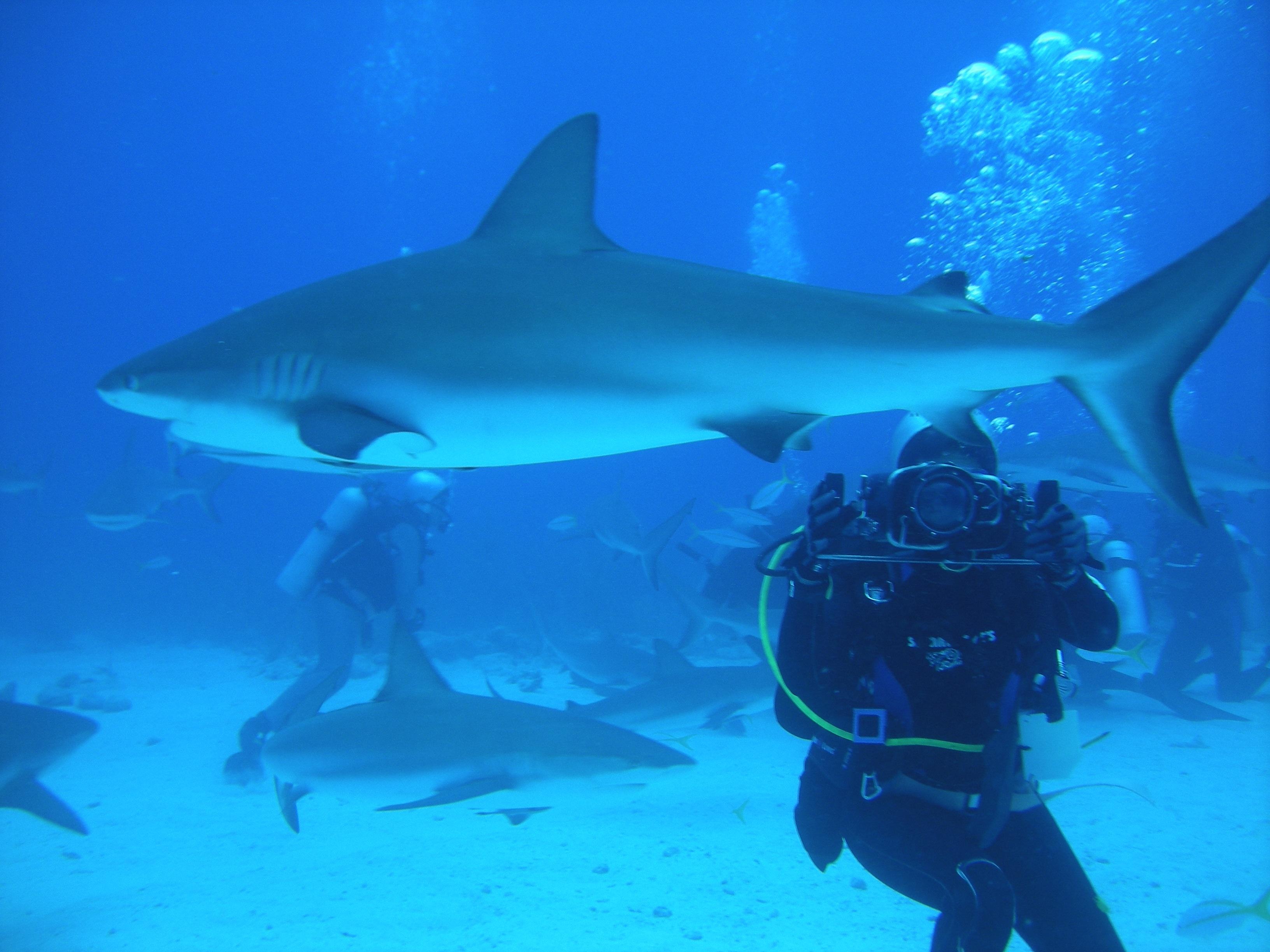 Buceo en australia nadando con tiburones