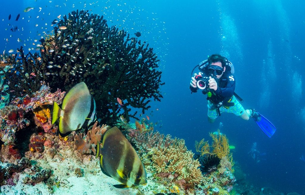 dive master - explore coral and fish with our biodiversity eco resort dive center