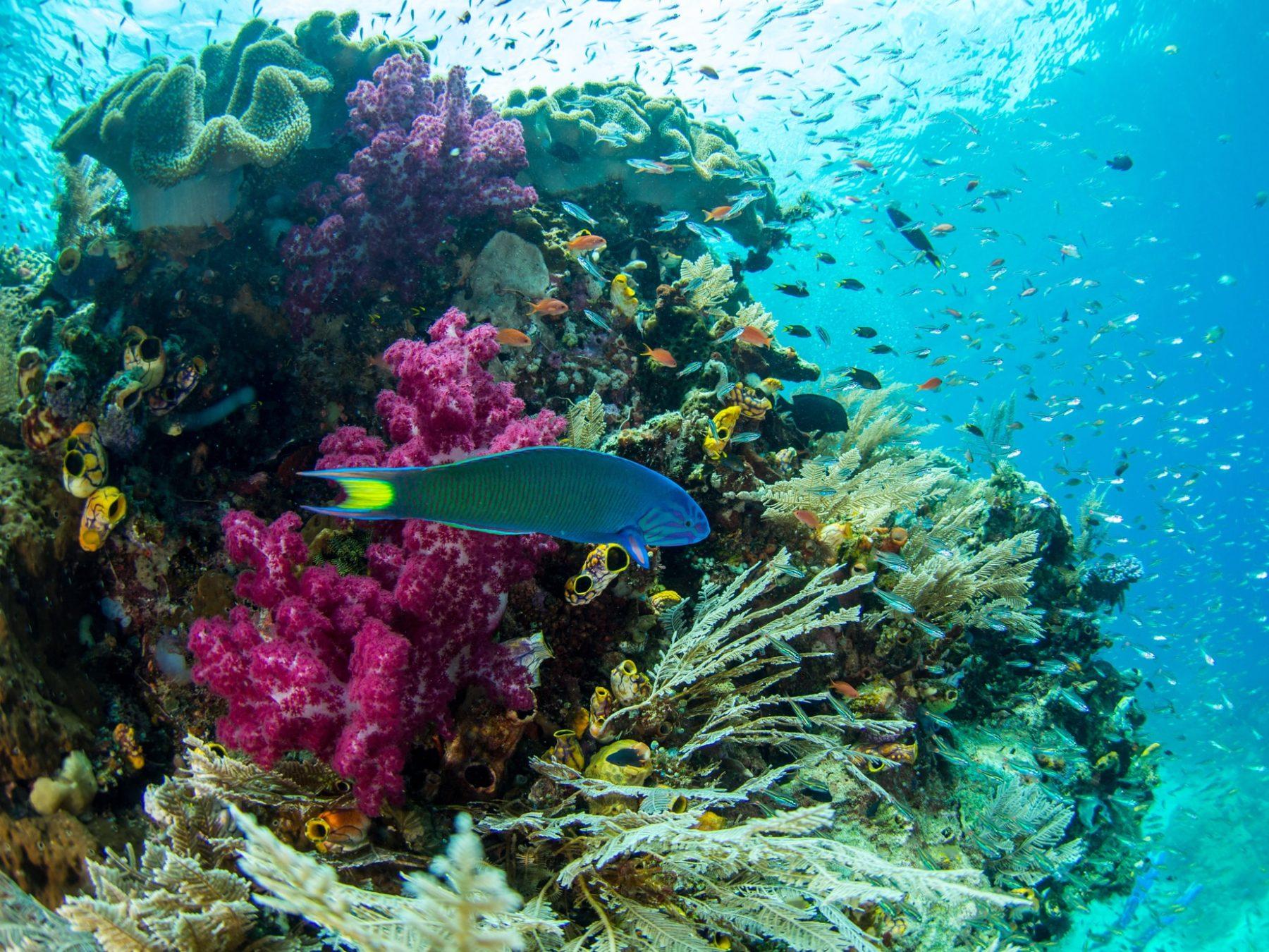 Teaching Kids To Dive In Raja Ampat Raja Ampat