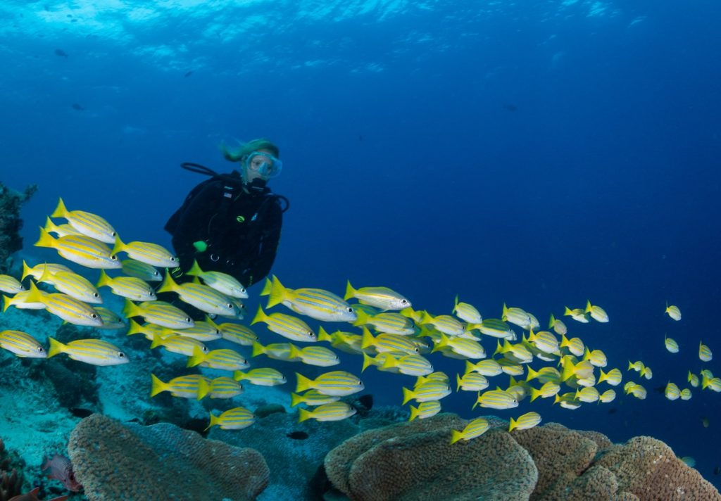 manta ray and dive master training with our biodiversity eco resort