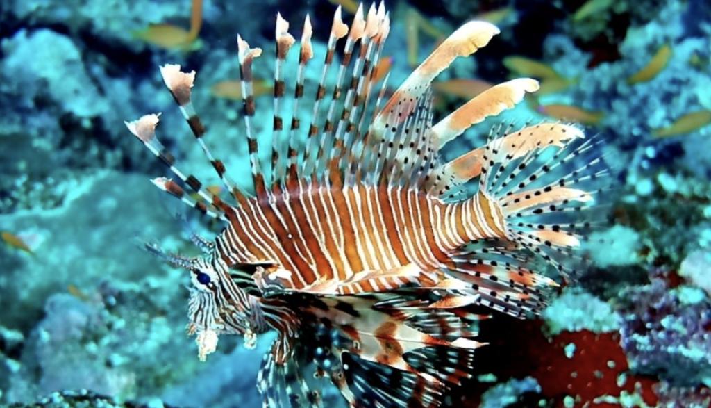 especies para disfrutar en tu buceo en indonesia