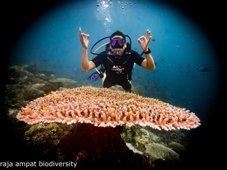 Give yourself the gift of a new hobby with a diving course in Raja Ampat!  From zero to hero!