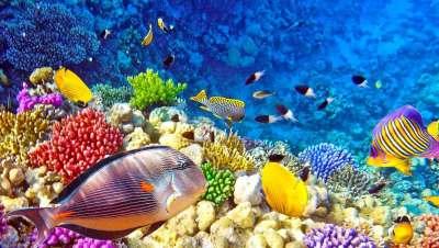 arrecifes del archipiélago