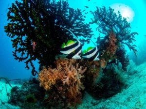 Contact us! For More Detail | Raja Ampat Biodiversity Eco Resort