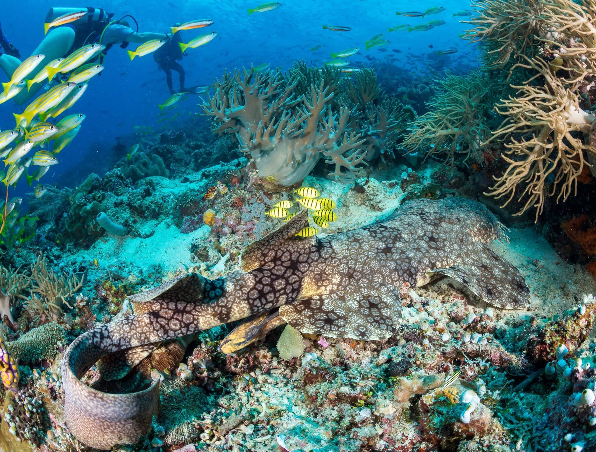 tiburon-alfombra (1)