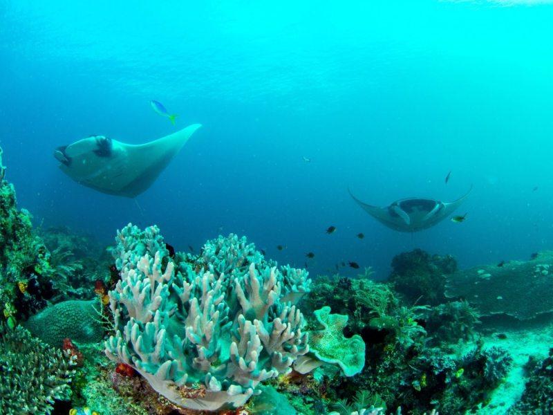 En Raja Ampat | Cultura y Naturaleza | Raja Ampat Biodiversity Eco Resort